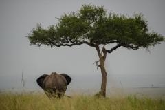 un éléphant et un arbre!