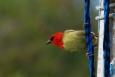 île maurice, cardinal de maurice